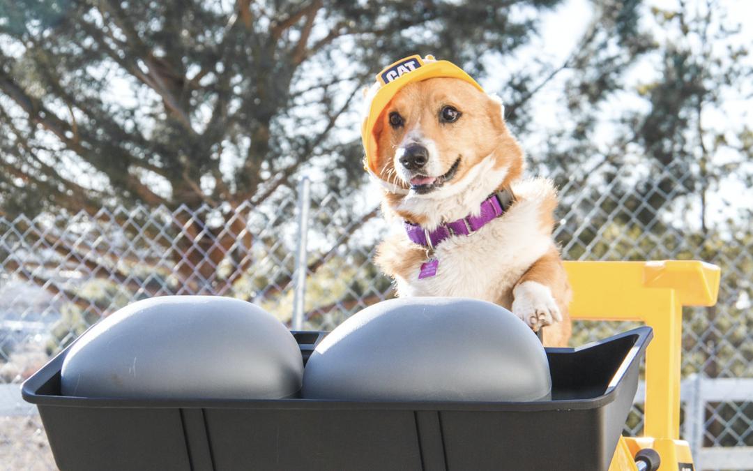 Inside Boozehounds: Construction Update