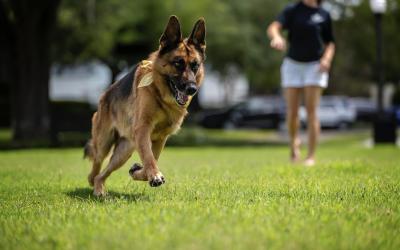 Inside Boozehounds: Founding Pup