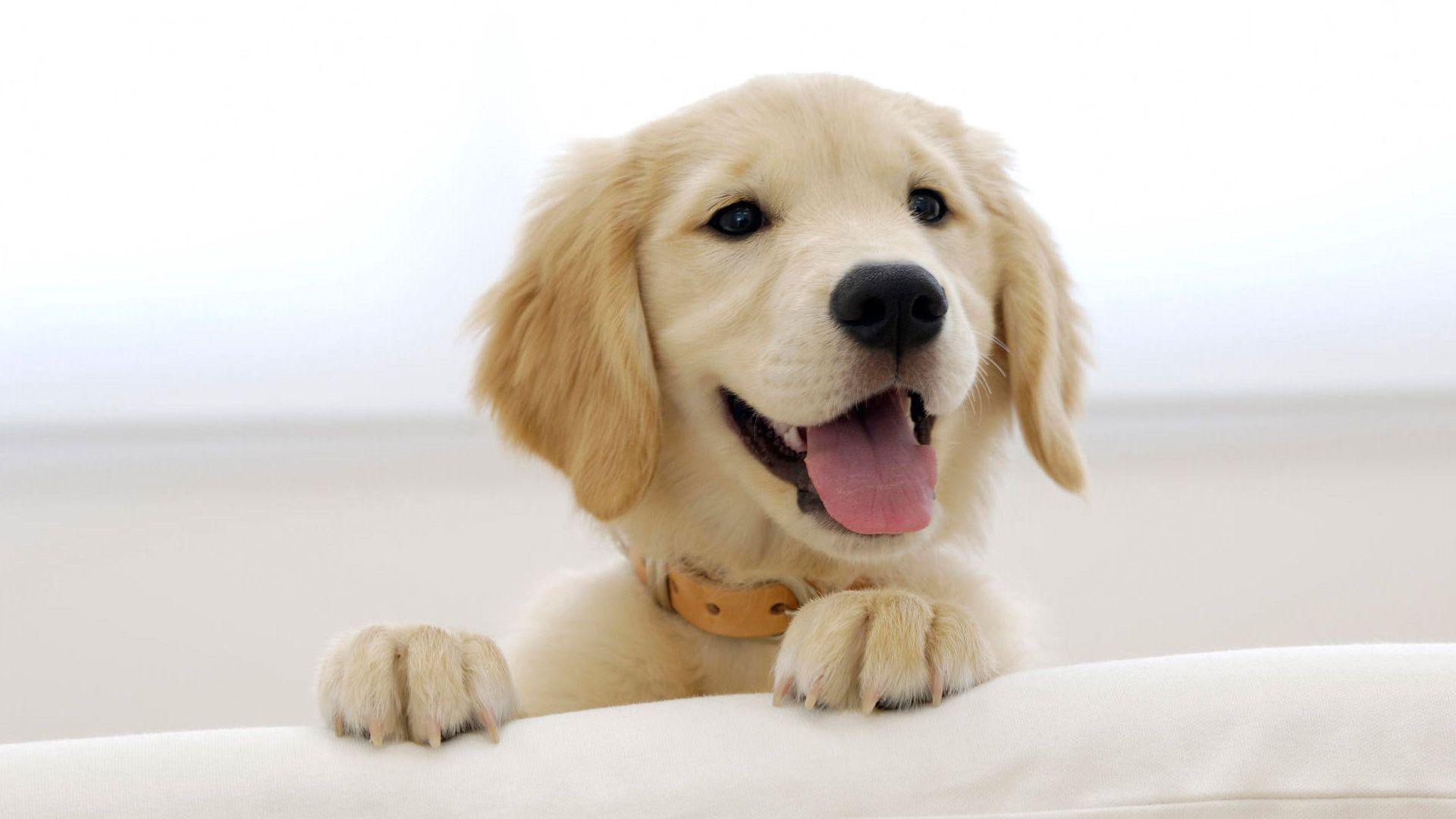 Boozehounds Dog Bar