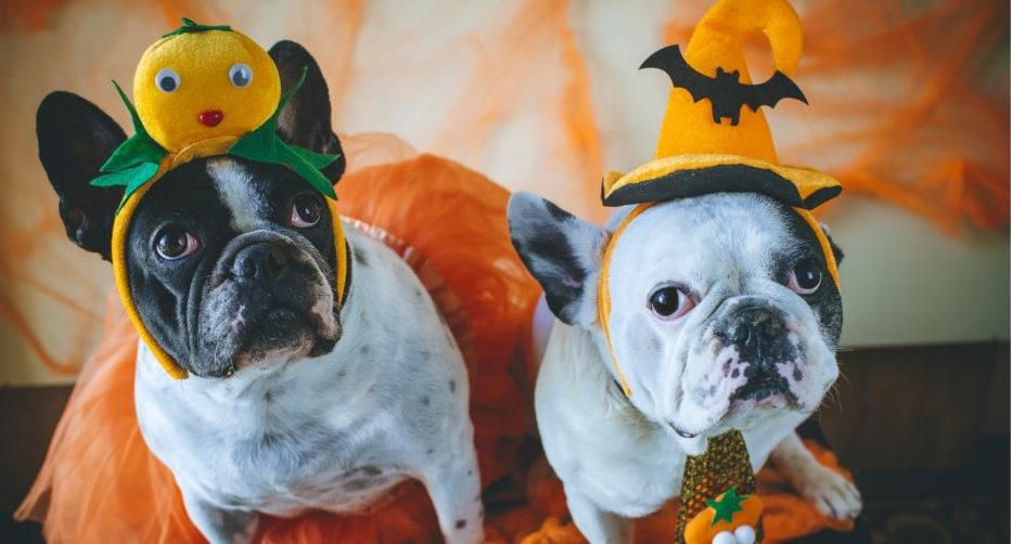Upcoming Event: Halloween Parade of the Pups